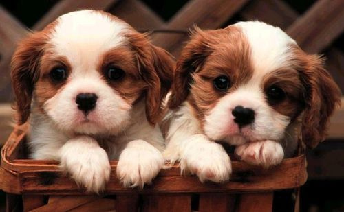 cute-puppies-pictures_1400050051